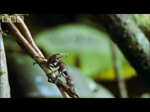Ang pinakamahusay na gamot para sa mga worm na tao