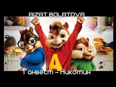 Ганвест-Никотин | Голосами Бурундуков