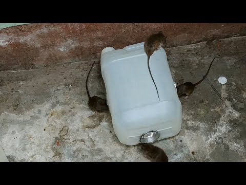 Best Idea Mouse Trap/DIY make A Mouse Trap Homemade Easy