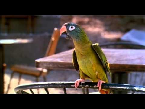 Paulie (1998) Official Trailer