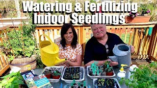 How and When to Water and Fertilize Indoor Seedlings / Spring Garden Series #3
