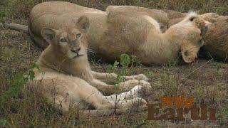 WildEarth - Sunset Safari - 4 April 2020, Part 1