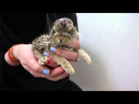Wildlife Rehabilition Society of Edmonton