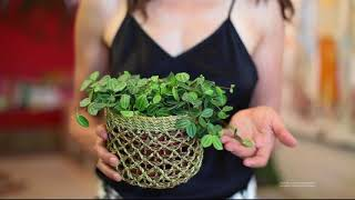 Six Easy Houseplants For Beginners — Plant One On Me — Ep 027