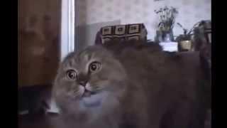 Кот ругается матом