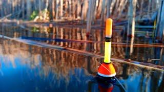 Мастера для ловли карася в стоячей воде