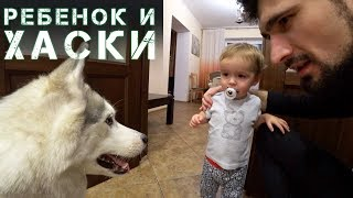 Капелла и малыш Данька. Реакция ребенка на собаку