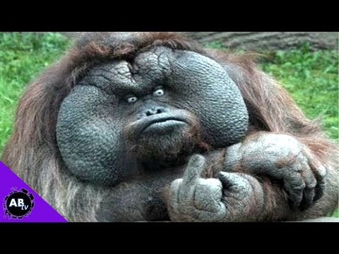 Animals Can Be Jerks! 5 Weird Animal Facts