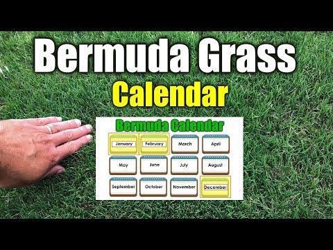 Bermuda Grass Calendar Please See New Calendar in Description