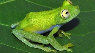 Самые опасные животные  Амазония  National Geographic