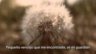 Download Youtube: Sufjan Stevens - Death with Dignity (subtitulos español)