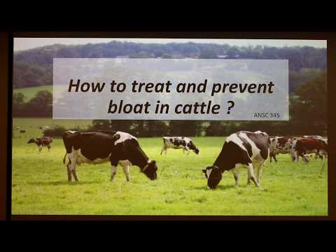 , title : 'How to Treat and Prevent Bloat in Cattle