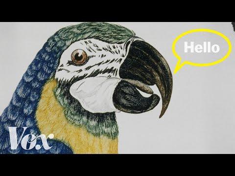 Proč umí papoušci mluvit jako lidé?