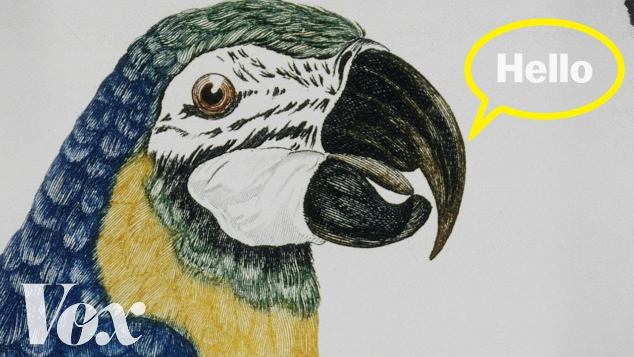 Why parrots can talk like humans thumbnail