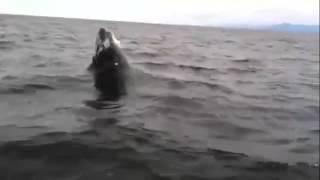 Игривый кит!  Прыжок на бис!!! | Отдых по полной | Мир интересного