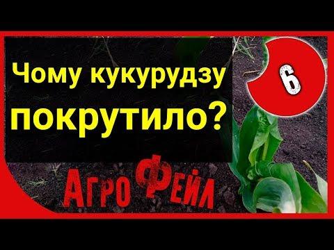 Почему кукурузу покрутило? АгроФейл 6