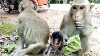 Baby Monkey Angry Cos Mum On Baby ST391 Mono Monkey