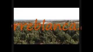 preview picture of video 'naranjas torreblanca'