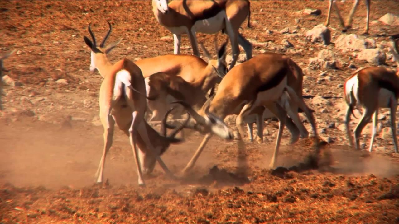 Namibia: Etosha Wasserloch (0:57)