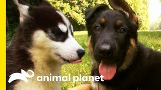 Which Adorable Dog Would You Want As A Family Pet? | Dogs 101