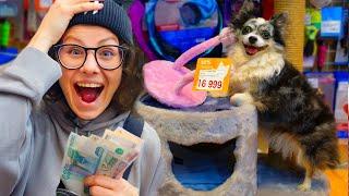 Покупаю собаке всё чего она коснётся в магазине! Собака сама выбирает что купить в зоомагазине