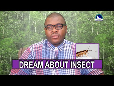 BIBLICAL MEANING OF INSECTS IN DREAMS - Evangelist Joshua Dream Interpretation