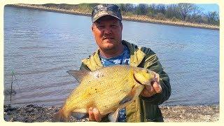 Где в ульяновске ловится рыба