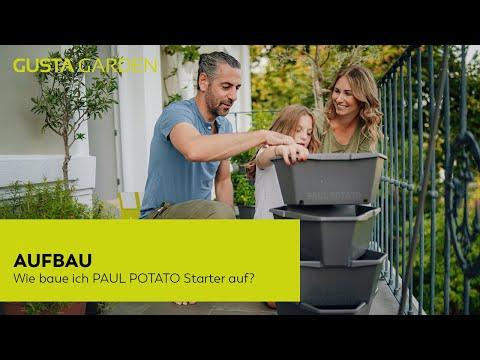 Kartoffelernte am Balkon - Anbau von Kartoffeln im PAUL POTATO Starter