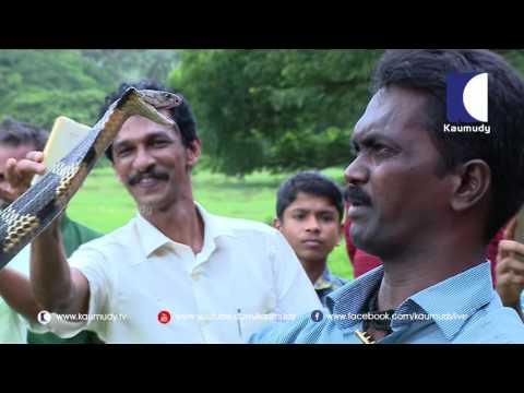 Vava Suresh Capturing 2 Year Old Attacking Baby King Cobra   Snake Master 164