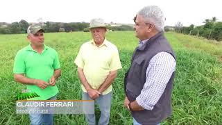 Pequenos agropecuaristas também apostam na Integração Lavoura Pecuária e Floresta
