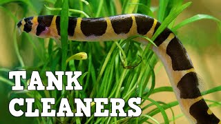 10 Best Fish Tank Cleaners!