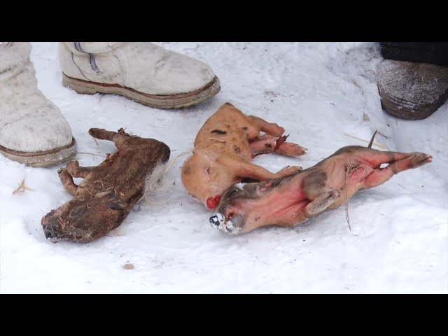 Морозы вынудили дачников обратиться в суд