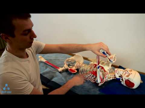 Załamując rodzajów i grup mięśniowych