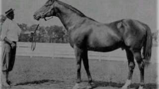 My List Of The Top 10 Thoroughbred Champions Of All-time