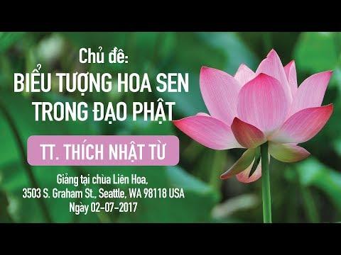 Biểu tượng hoa sen trong đạo Phật - TT. Thích Nhật Từ