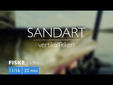Sandartfiskeri med Gordon P. Henriksen