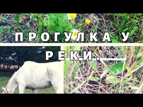 Прогулка у реки с внучкой/ Ищем грибы/ Встретили лошадь