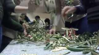 preview picture of video 'Lampedusa,DomenicaDellePalme'