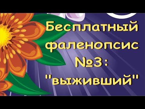 """РЕАНИМАЦИЯ орхидей:БЕСПЛАТНЫЙ фаленопсис (""""ВЫЖИВШИЙ"""").С днем рождения,Лариса!."""
