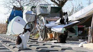 【地域猫】洗濯ネットも使ってみましたが、やはり簡単ではないナナ姫の投薬。~朝夕の投薬と食事風景~【魚くれくれ野良猫製作委員会】   Kholo.pk