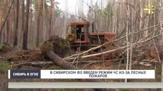 В Сибирском ФО введен режим ЧС из-за лесных пожаров