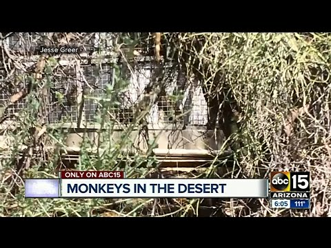 Monkey facility run by out-of-state university