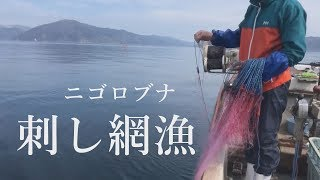 【沖島 もんて便り】ニゴロブナの刺し網漁