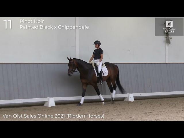 Pinot Noir under saddle