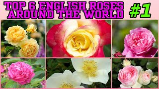 97 - Top 6 English Roses Around The World || Floral Gardening