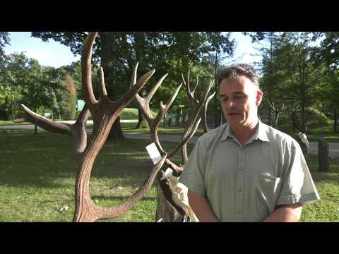 Szarvasbőgés és vadászat