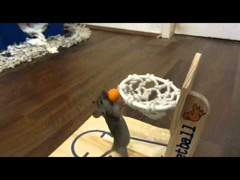 Cute Mouse Playing Basketball Mp3