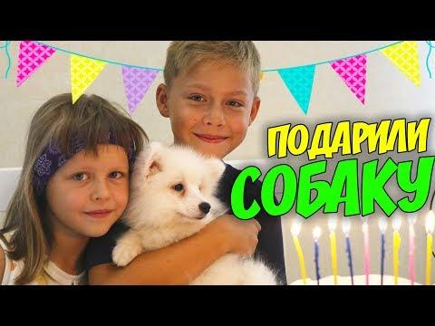 ВЛОГ День рождения Миши Подарили собаку