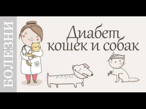Диабет кошек и собак. Признаки, лечение и профилактика диабета.