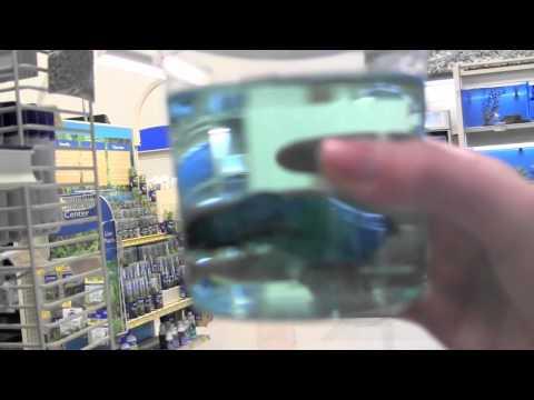 Follow me around vlog: Getting my Betta Fish!